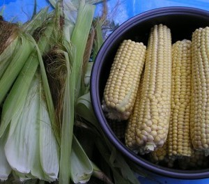Варим кукурузу в мультиварке