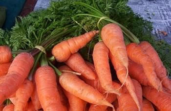 Погреб - удачное место для хранения моркови