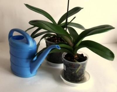 Особенности ухода за орхидеей после цветения