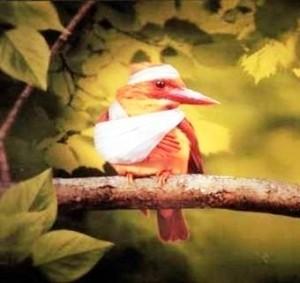 Травматизм среди домашней птицы