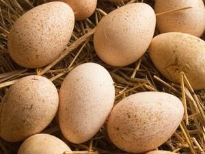 Можно ли хранить яйца в камере суточного запаса