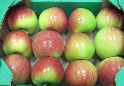 Россошанские яблоки - зимний сорт