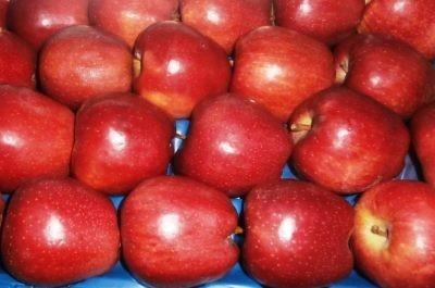 Товарный вид яблок сорта Прима