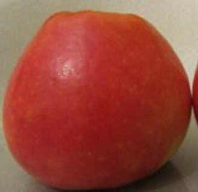Яблоки сорта Фонарик