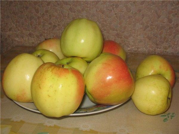 Яблоня кальвиль снежный описание и характеристика сорта с фото