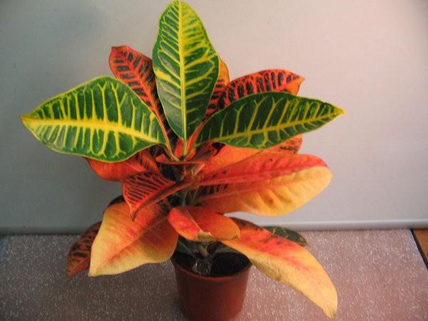 Теплолюбивое растение