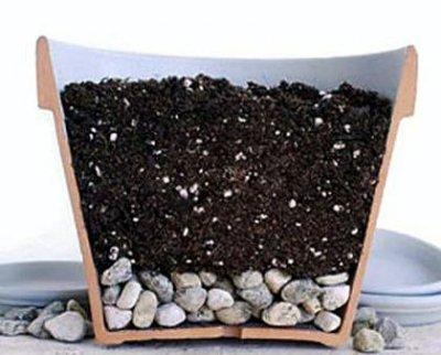 Как рассадить цветущий каланхоэ