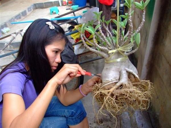 Правила обрезки корней
