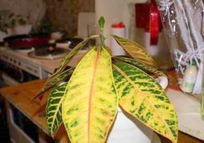 Причины увядания листьев
