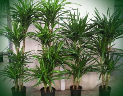 Как размножается пальма — Все цветы