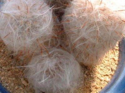 Виды пустынного кактуса