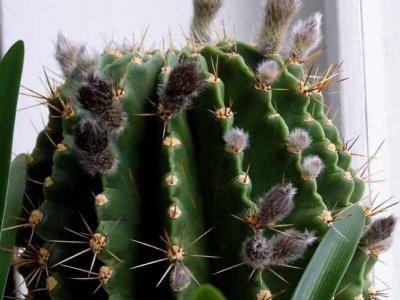 Освещение для кактуса