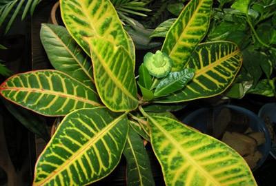 Листь обладают разнообразием форм