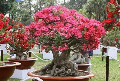 Удивительное растение из центральной Африки