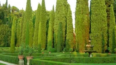 Кипарис вечнозеленый (пирамидальный): фото, описание, уход, болезни и вредители