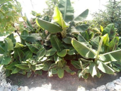 Выращивание