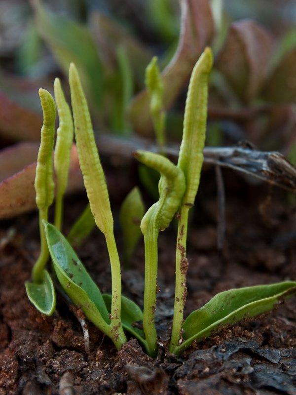Нивяник- как ухаживать за любимым цветком садоводов (110 фото)