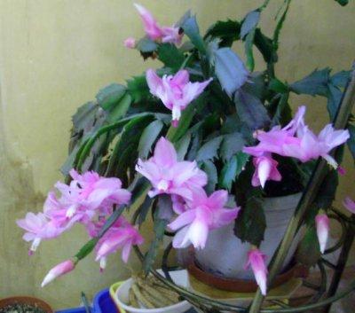 Болезни кактуса