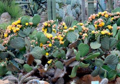 Содержание кактуса дома