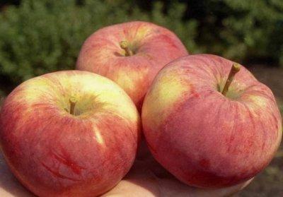 Каким должен быть уход за яблоней?
