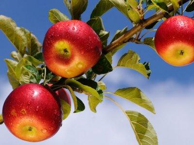 Заботливый уход — гарантия высоких урожаев