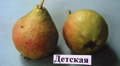Самоплодные сорта груш описание особенности ухода