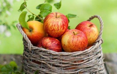 Как сохранить яблоки в погребе всю зиму