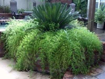 asparagus-peristii2_400x300-400x300.jpg