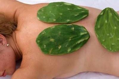Фото кактуса Опунции, лечебные свойства, полезные свойства плодов