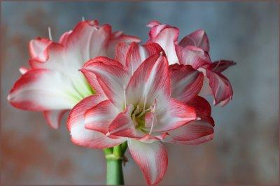 Трудности при цветении
