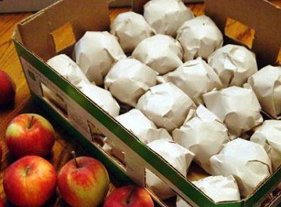 Когда снимать яблоки богатырь на хранение