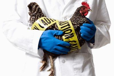 Какие симптомы при птичьем гриппе