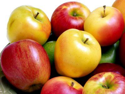 Когда собирают поздние сорта яблок