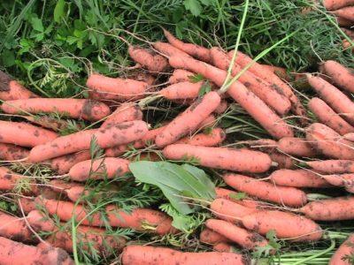Как переработать мелкую морковь