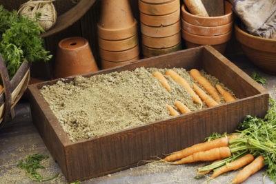 Как хранить морковь зимой в погребе в квартире на балконе