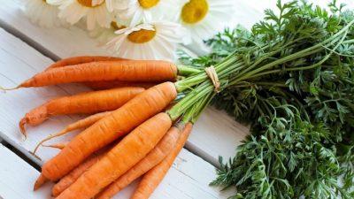 Как хранить морковь на балконе зимой: можно ли это сделать в домашних условиях и при какой температуре следует держать в квартире, собранный осенью корнеплод
