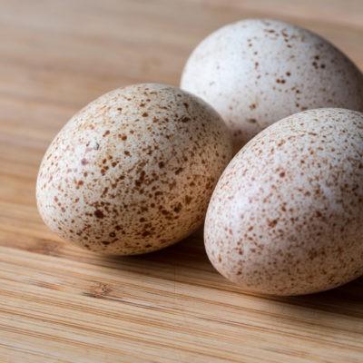 Инкубационное яйцо страуса инкубатор для страусиных яиц