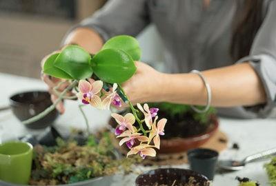 Как пересадить орхидею – шаг за шагом