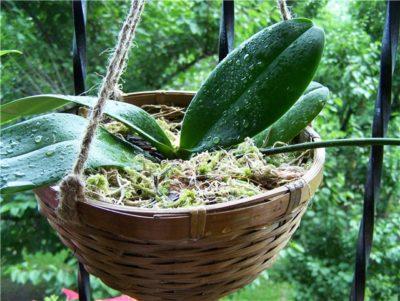 Какой грунт нужен орхидее