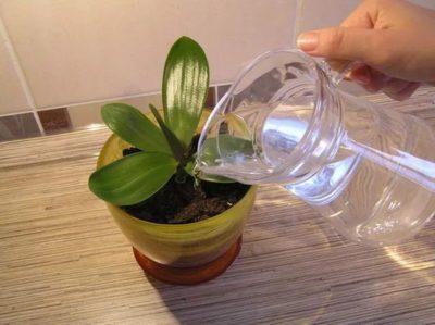 Чесночная вода для цветов польза или вред