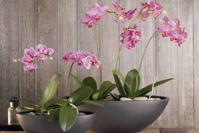 Как ухаживать за орхидеями – 7 шагов для новичка