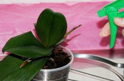 Какие удобрения можно применять для орхидей