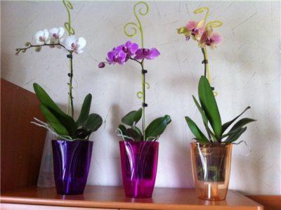 Можно ли выращивать фаленопсис в непрозрачном горшке?