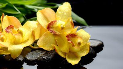 Леопардовая орхидея